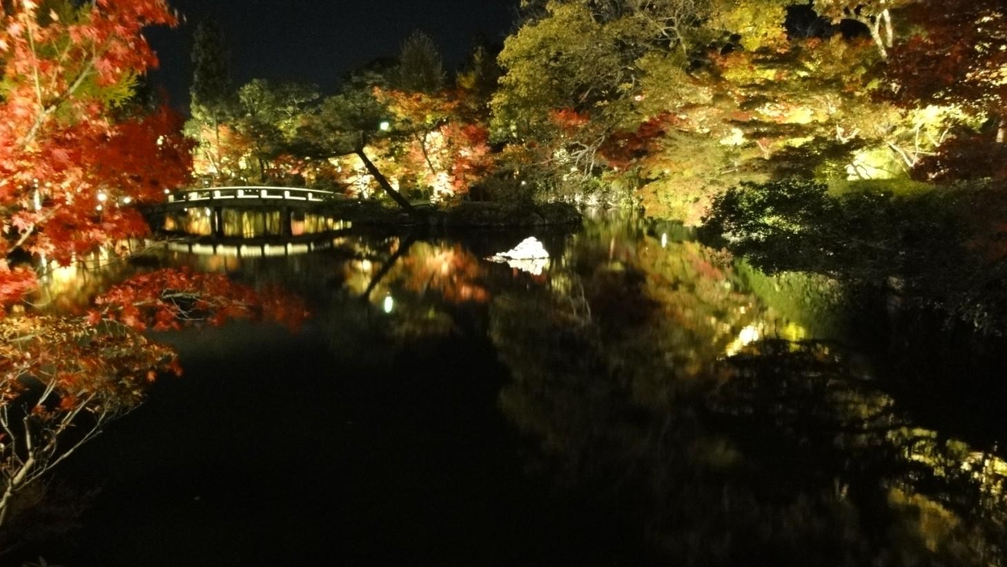 夜楓與池面倒影