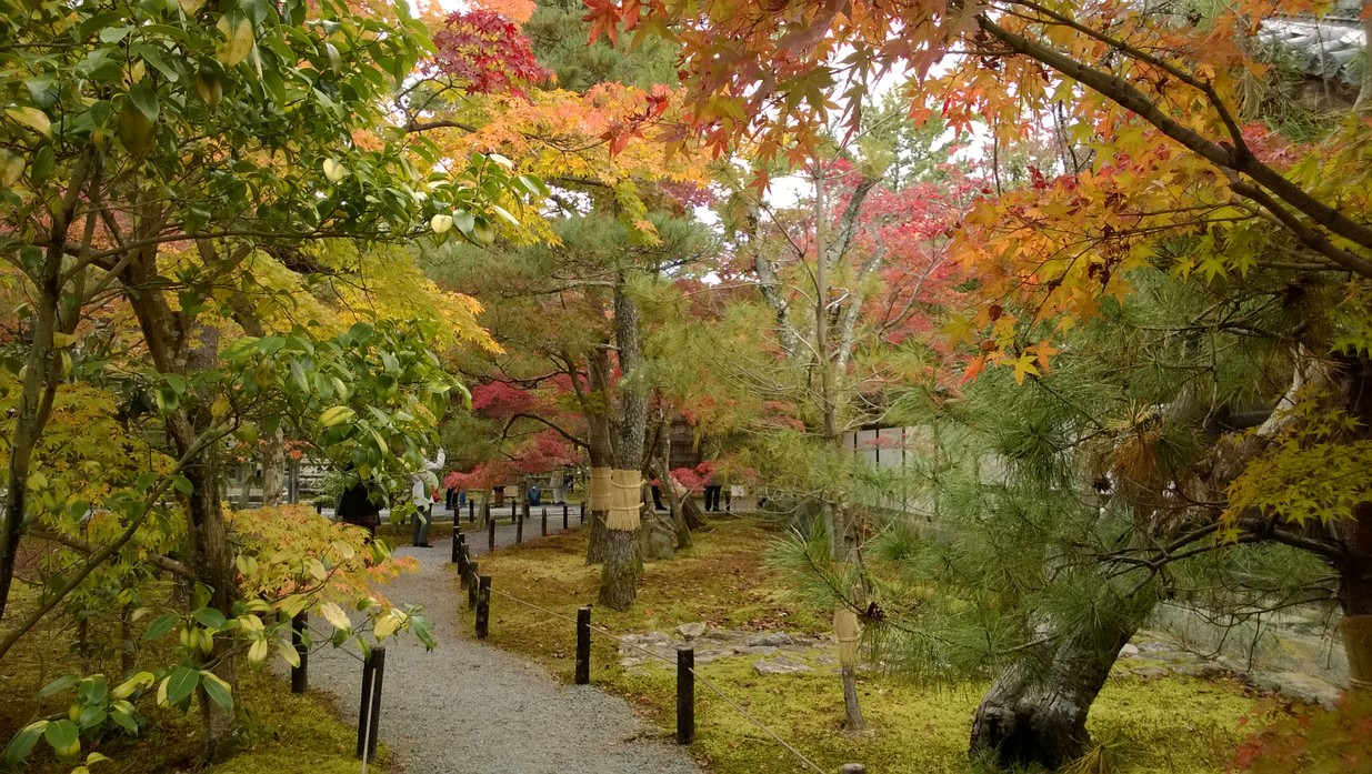 清涼寺庭院