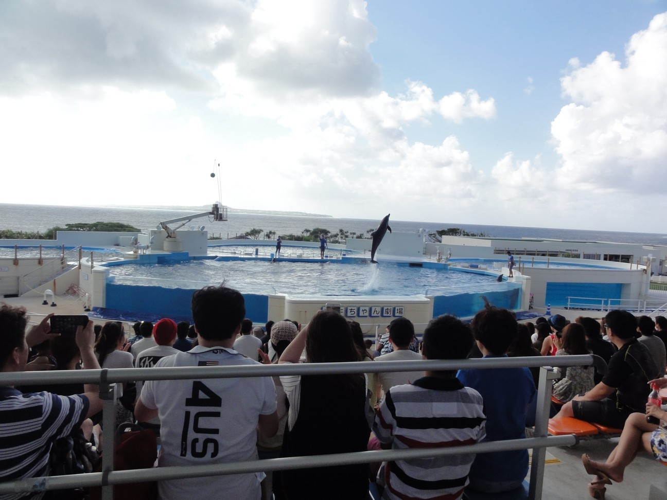水族館海豚表演