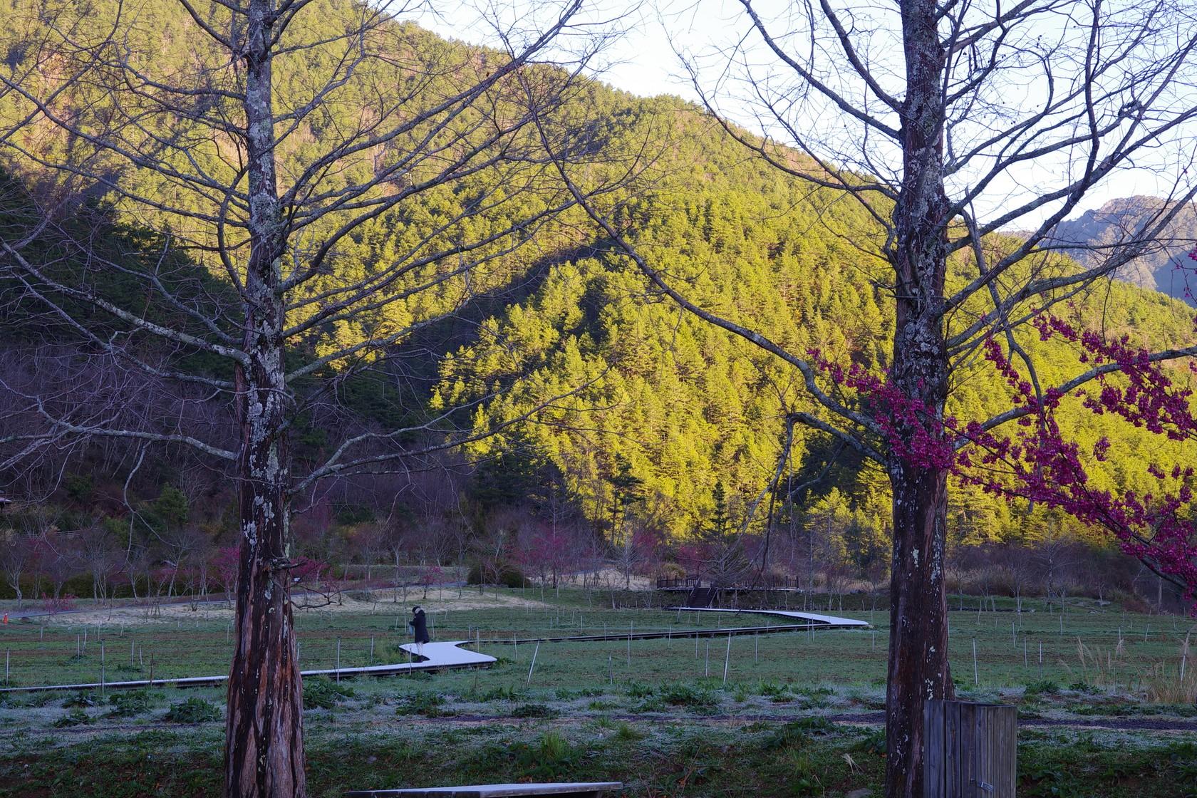 清晨結霜的木板步道