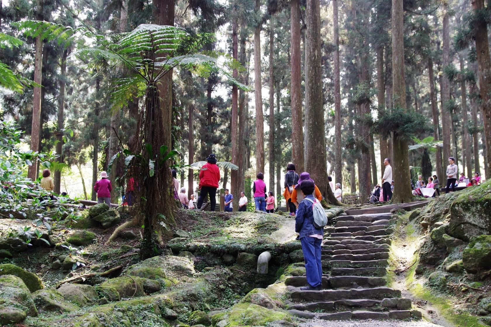 跟著音樂做森林體操的人們